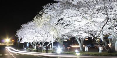小野市役所前ライトアップ