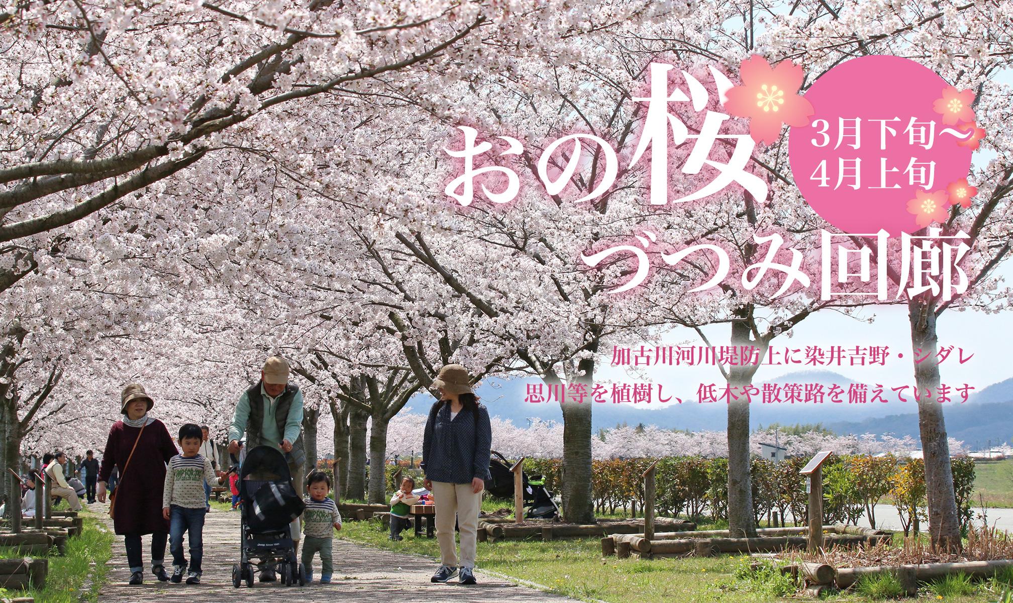 おの桜づつみ回廊