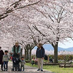 おの桜づつみ回廊 サムネイル